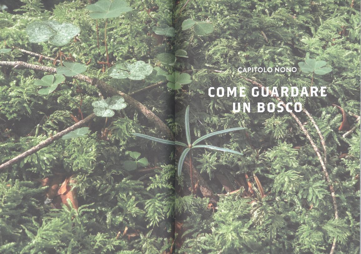 TecaLibri: Daniele Zovi: Alberi sapienti, antiche foreste
